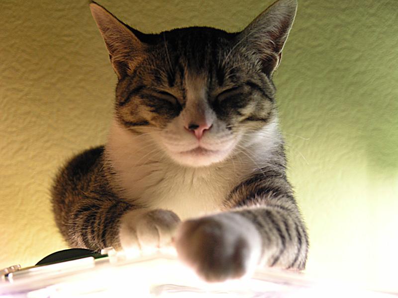 Mon chat Astro le beau 311