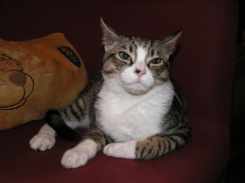 Mon chat Astro le beau 411