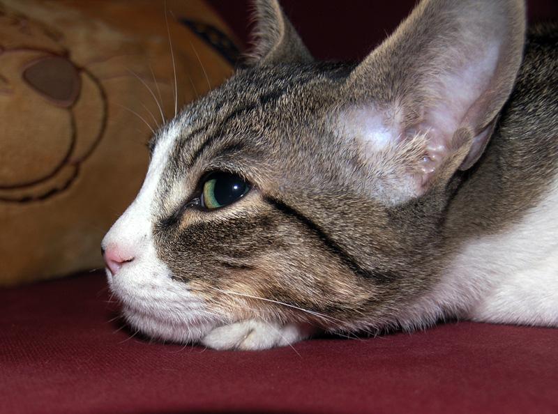 Mon chat Astro le beau 510