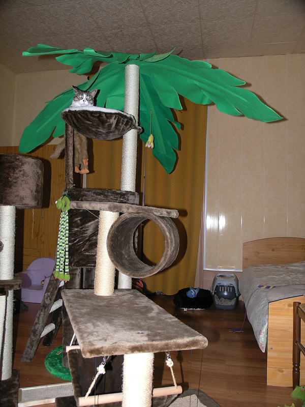 Mon chat Astro le beau 610
