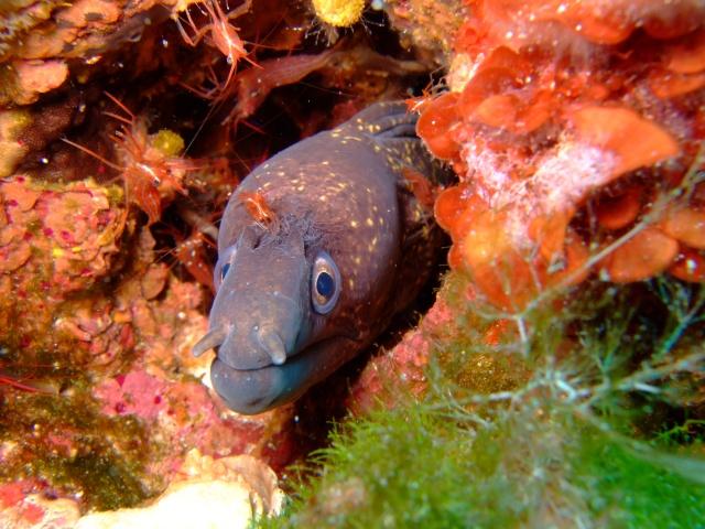 May's Photo Challenge - Close Up Menorc13