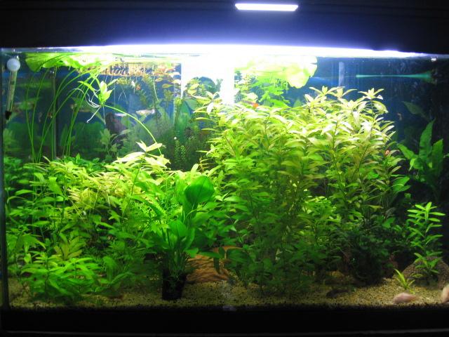 mon aquarium actuellement Img_0056
