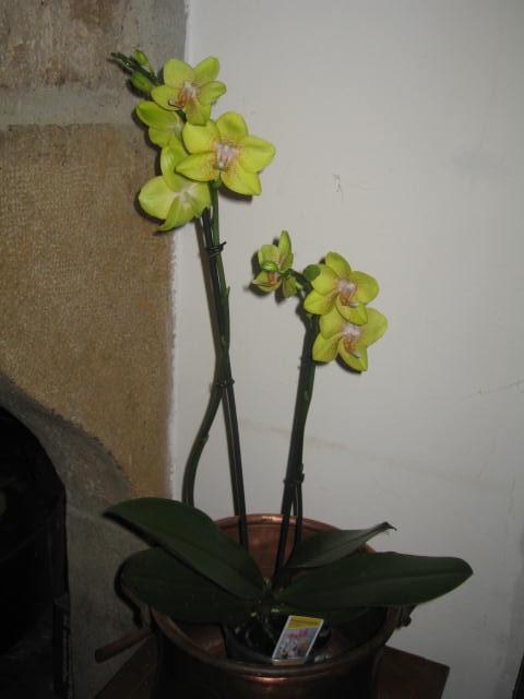 mes orchidées Img_0239
