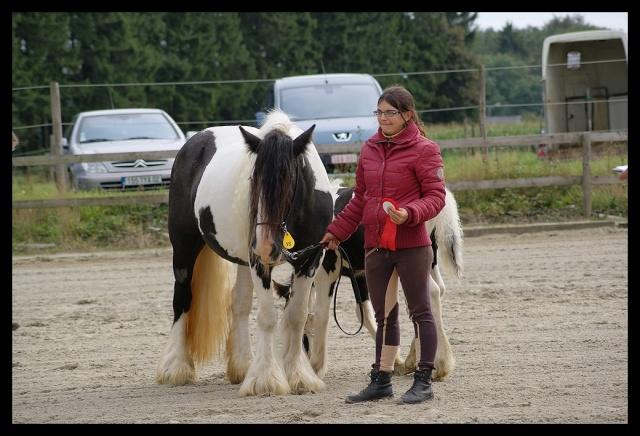 Gypsyranch - 19/01/2011 Concou15