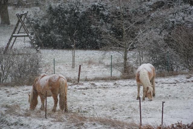 Tempète de neige: chevaux et paysage Dsc00410