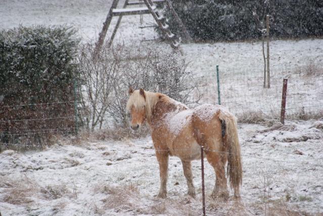 Tempète de neige: chevaux et paysage Dsc00411