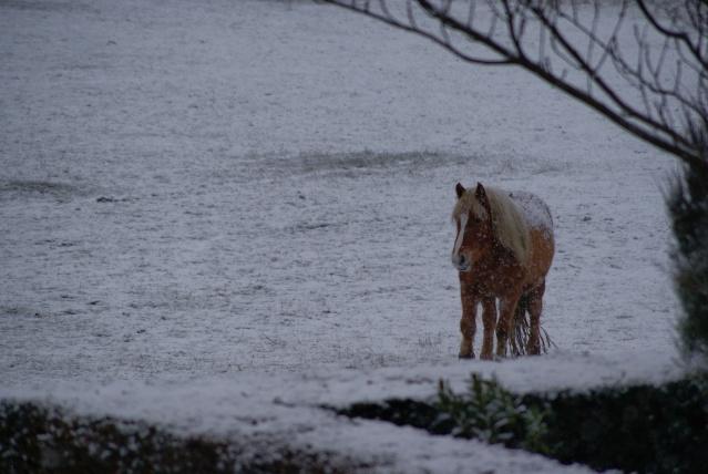 Tempète de neige: chevaux et paysage Dsc00412