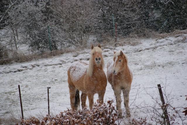 Tempète de neige: chevaux et paysage Dsc00413