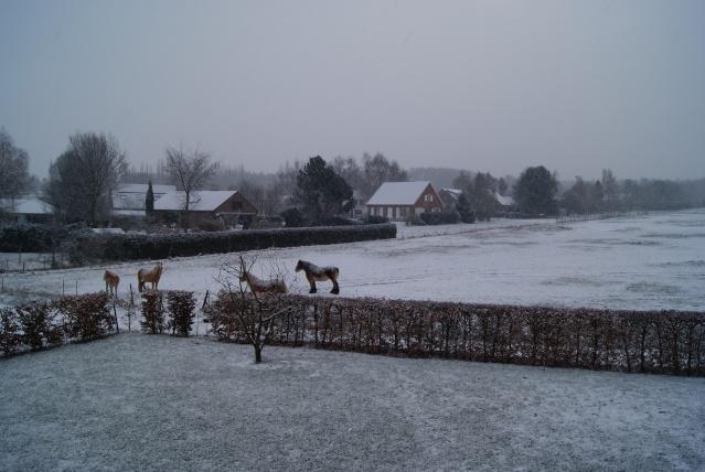 Tempète de neige: chevaux et paysage Dsc00416
