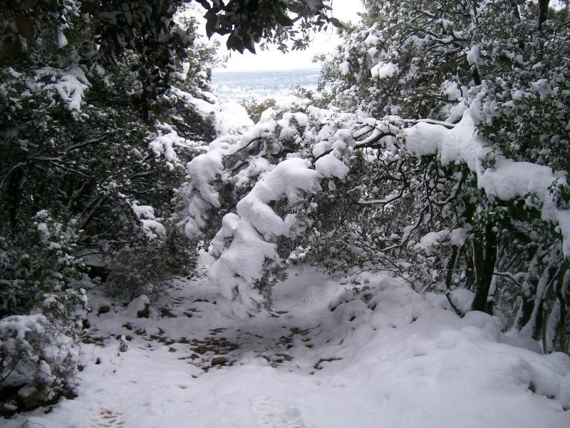 neige chez viti - Page 2 100_2833