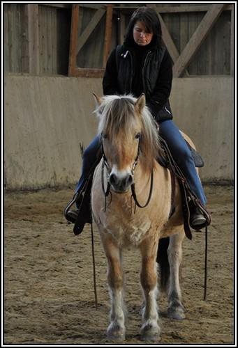 """• Mission """"création de chevaux"""". - Page 4 Fjord10"""