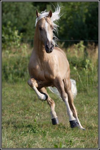 """• Mission """"création de chevaux"""". - Page 3 Illusi10"""