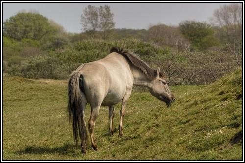 """• Mission """"création de chevaux"""". - Page 3 Konik210"""