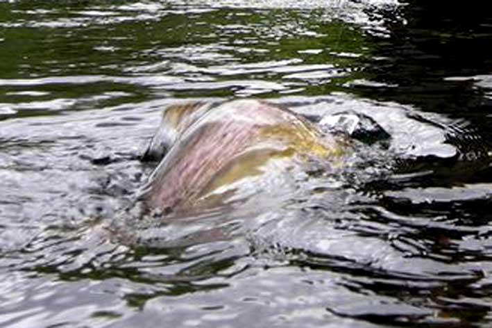 Fotografije ulova, ribe, oprema i dr. Dscn6010