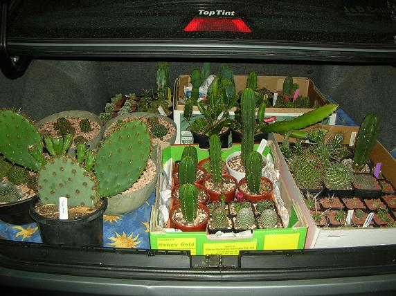 Moving house with cacti... a mini-blog Dasboo10