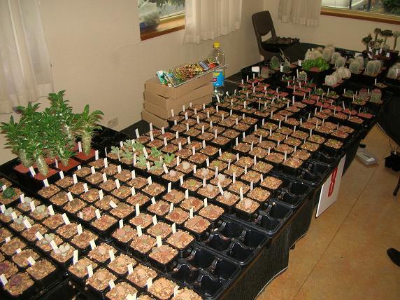 2010 CSSA Spring Show! Sales410