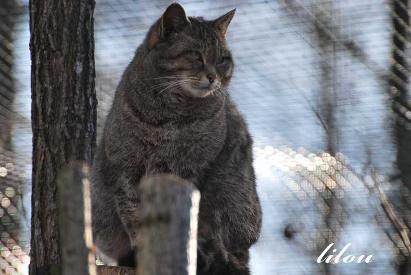 Photos 2009 du parc des félins avec Janvier - Février Photos33