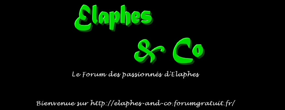 Elaphes & Co