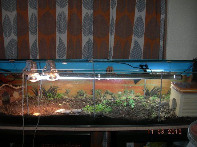 terrarium possible? Dscn9598
