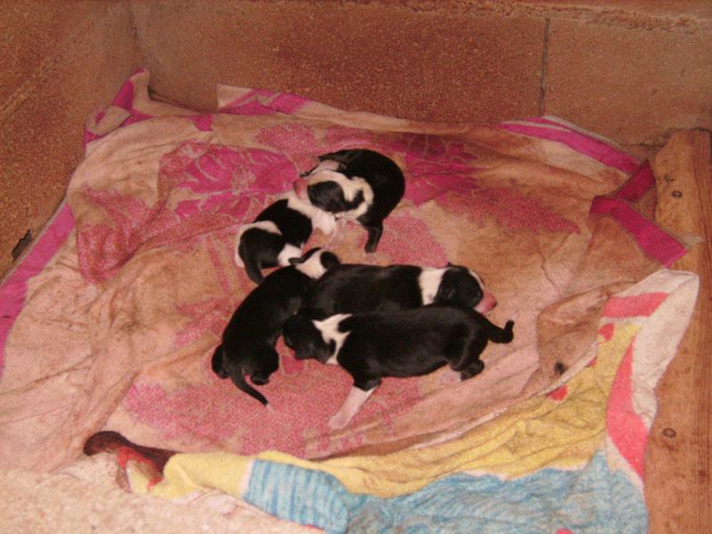 Nos petit bébé Border collie ( video de la tété page 1= new photos page 2 ) Redif_10