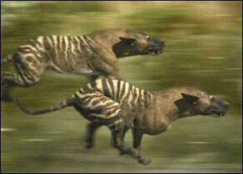 Hyaenodon Hyaeno10