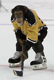 La ligue Magnus (hockey sur glace, France) - Page 7 Singe_10