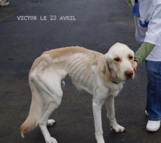 Petition pour Victor le chien labrador. 440x2910