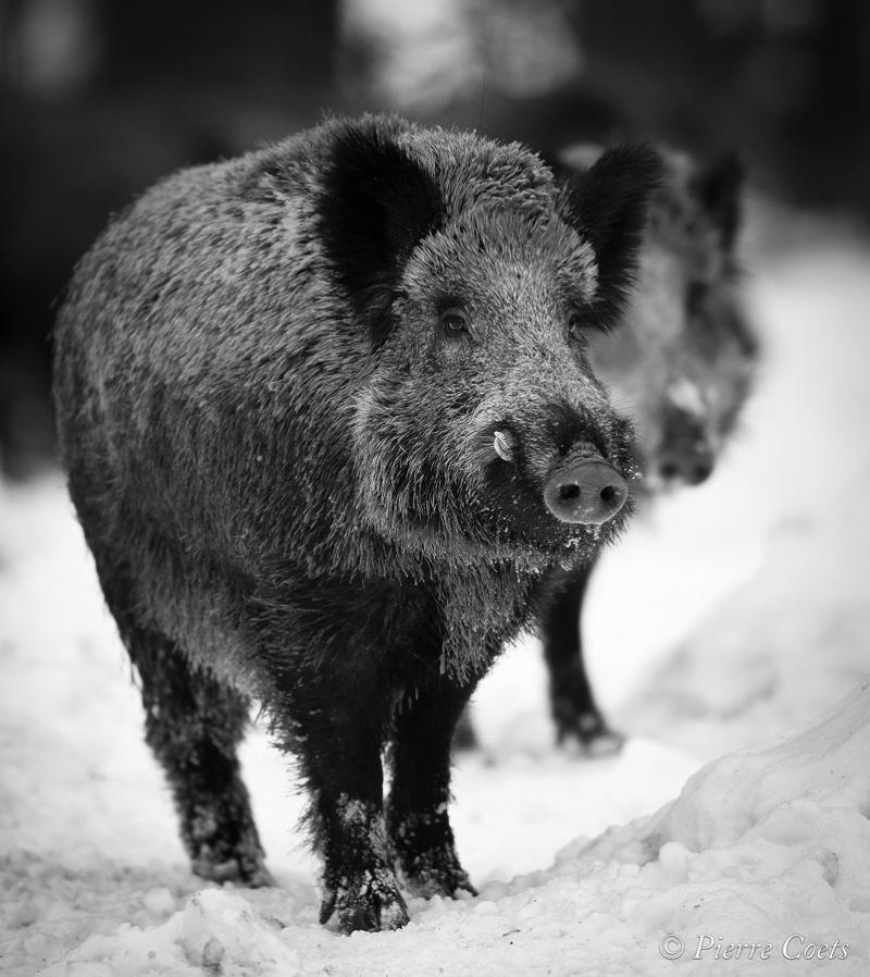 Parc animalier de Saint Hubert en hiver _pie0810