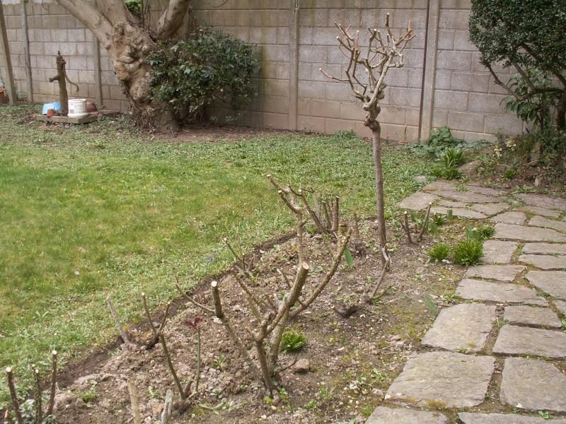 le jardinet de Mapy - Page 5 1er_ma12