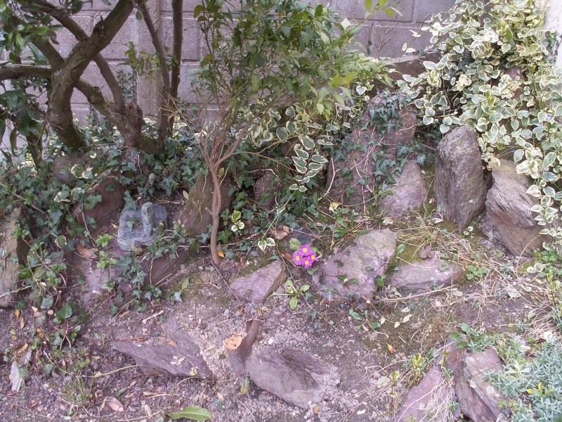 le jardinet de Mapy - Page 5 1er_ma13