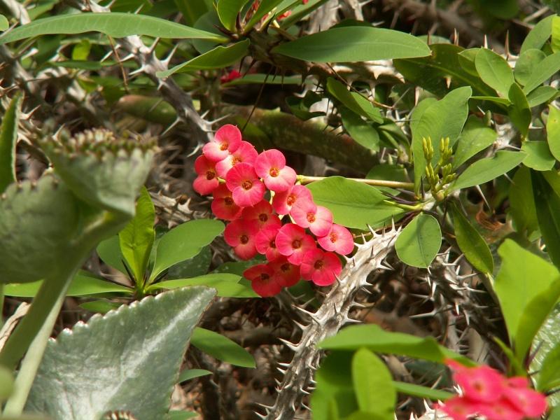 petite virée au parc floral section cactées Juin_216