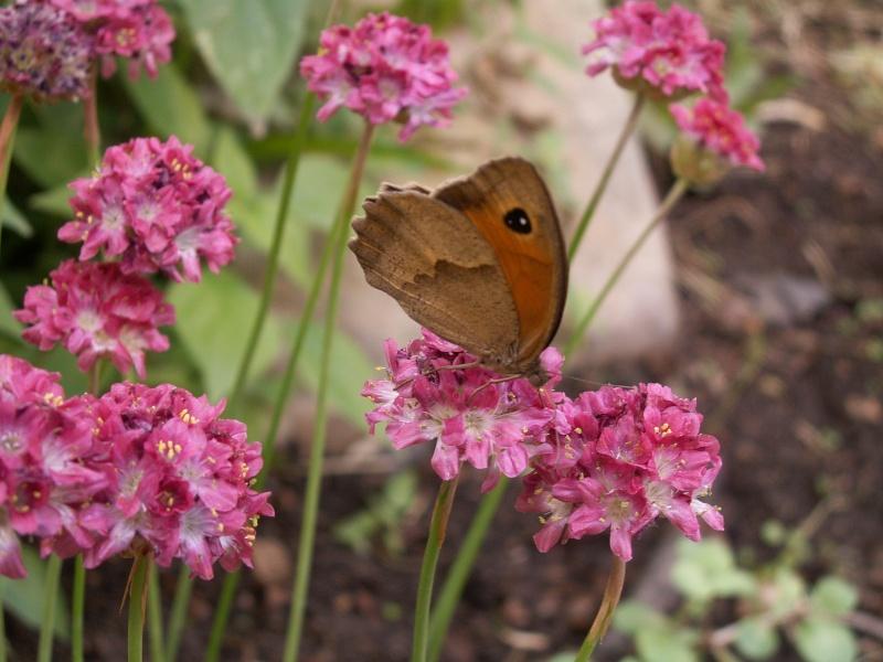 petite virée au parc floral section bestioles Juin_223