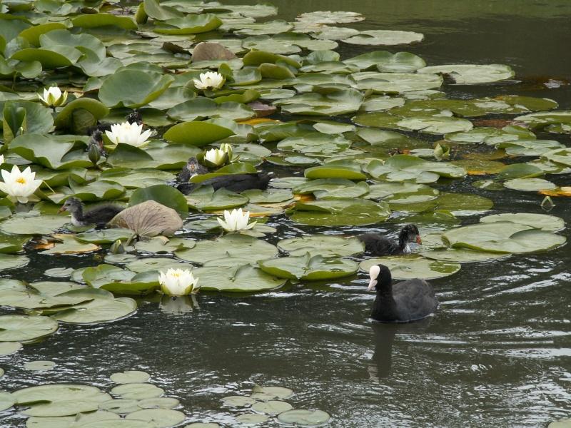 petite virée au parc floral section bestioles Juin_229