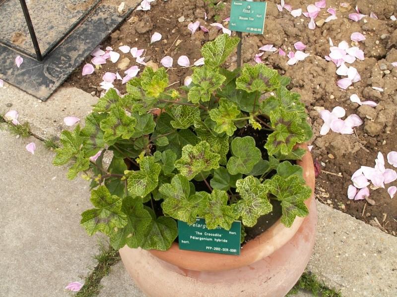 petite virée au parc floral section plantes fleuries Juin_234