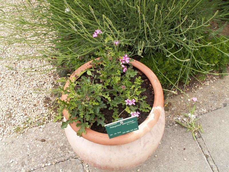 petite virée au parc floral section plantes fleuries Juin_236