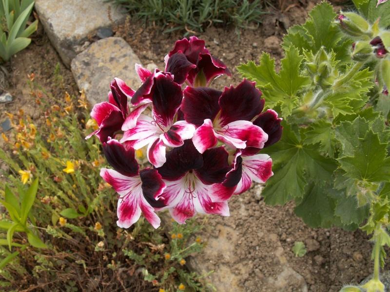 petite virée au parc floral section plantes fleuries Juin_238