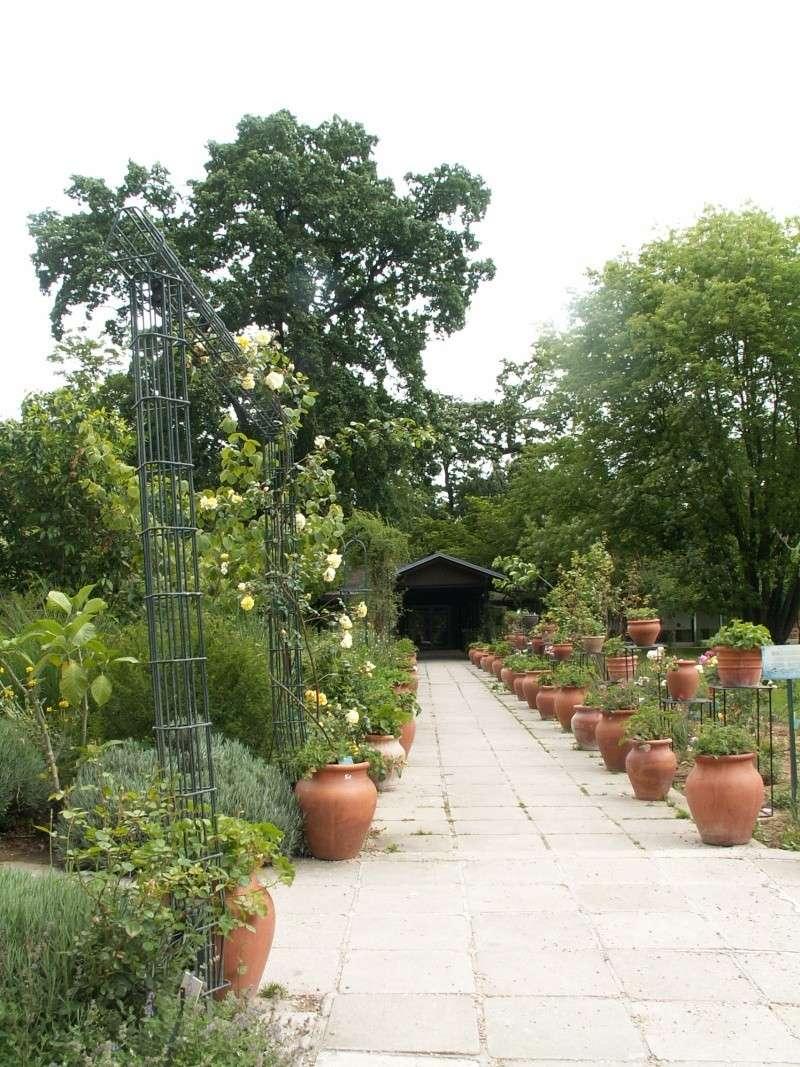 petite virée au parc floral section plantes fleuries Juin_239