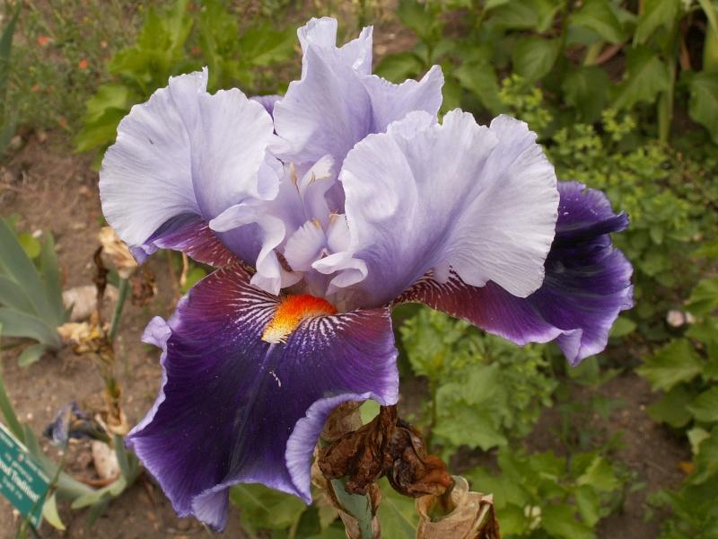 petite virée au parc floral section plantes fleuries Juin_243