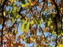 Thème du mois de Novembre : Les couleurs de l'Automne Novemb14