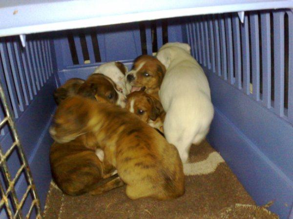 Kala y sus cachorros 113