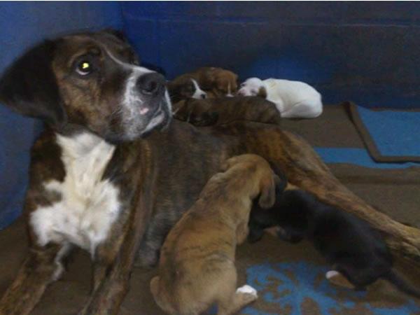 Kala y sus cachorros 115