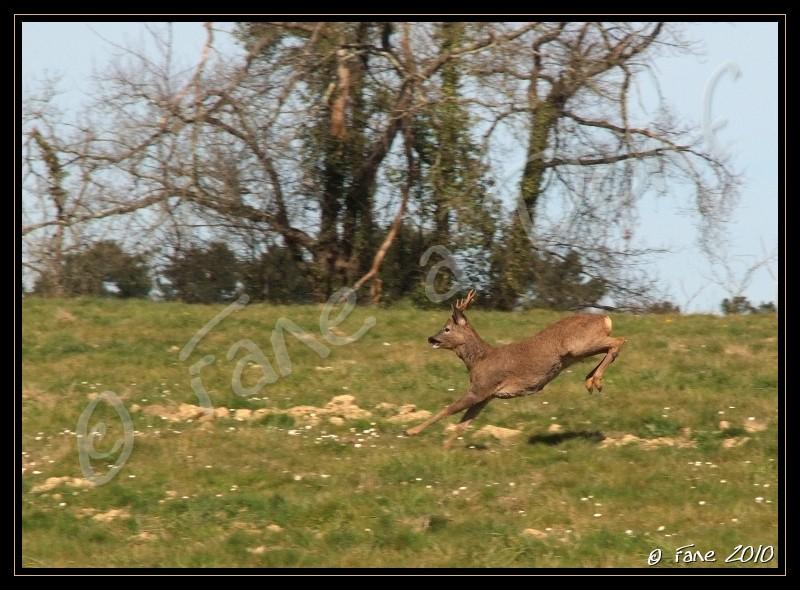 Arzacq (grand) cru 2010 Dscf4011