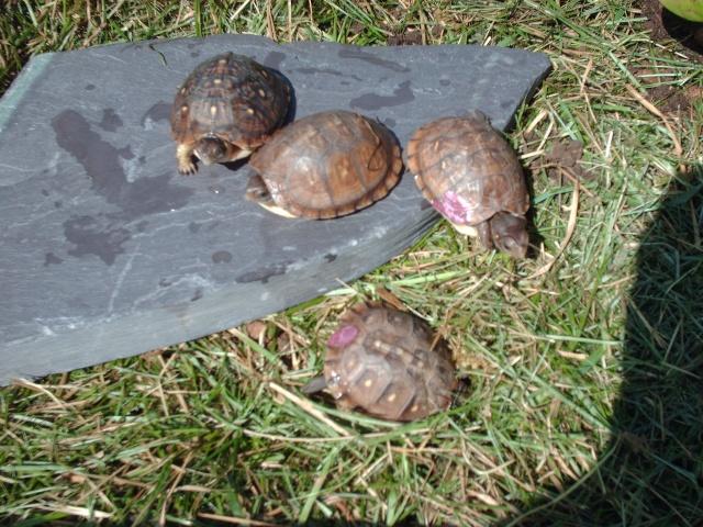 Mes petites cradouillouses Image191
