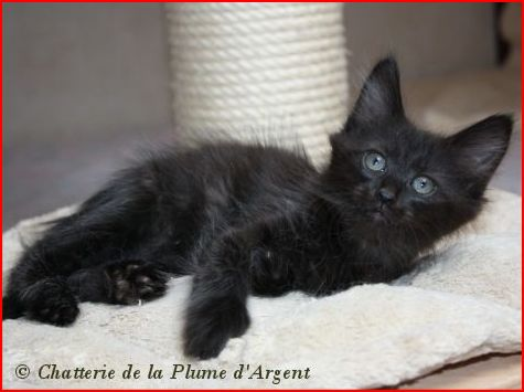 Spécials Photos : Avant/Après de nos chats Frimou16