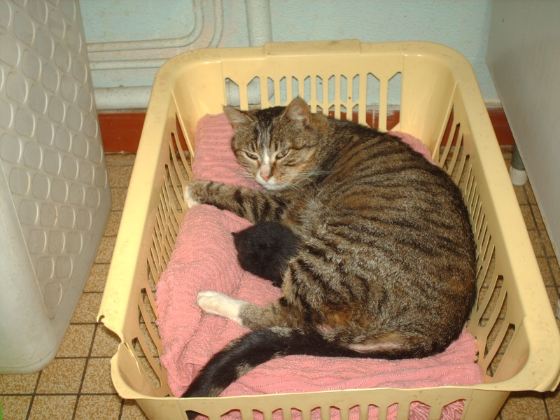 chaton sauvé Hpim4011
