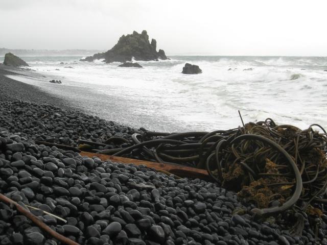 Seaside 2008 Img_0514