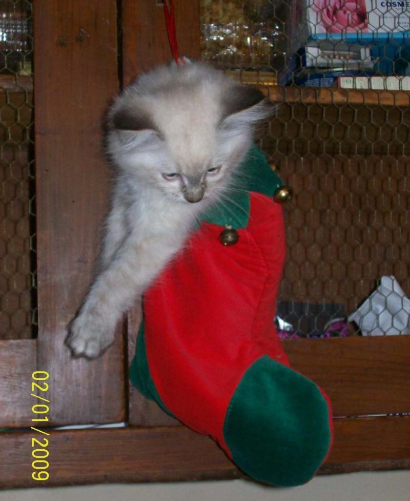 concours photo:  le chat en fête! Chat-d10
