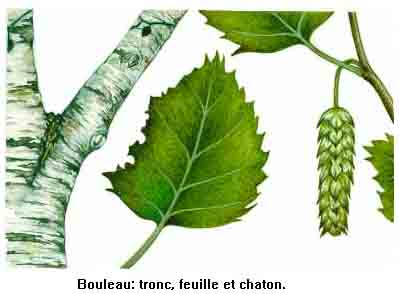 PLANTES, GRAINES , BAIES SAUVAGE . POUR LES OISEAUX DE NOS REGION . Boulea11
