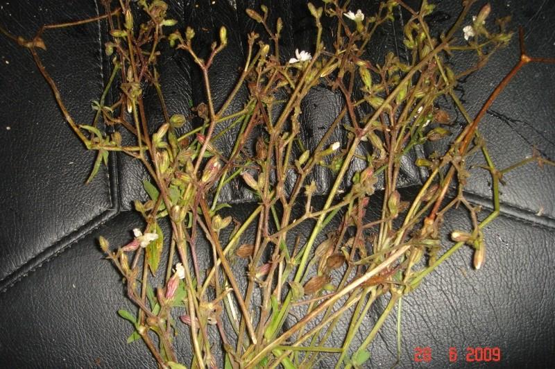 reconaitres cest quelques plantes et graminées Dsc03411