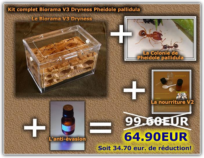 des fourmis en vivarium !!!!!! Kit-dr10